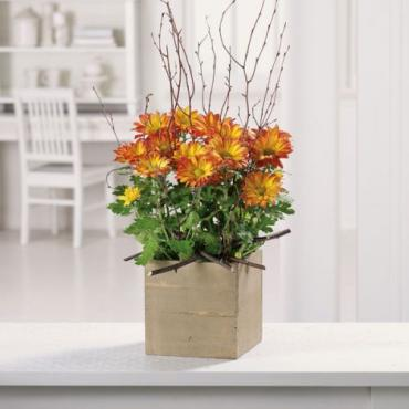 Woodlands Mum Planter