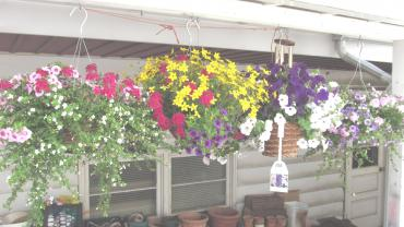 BEAUTIFUL HANGING BASKET